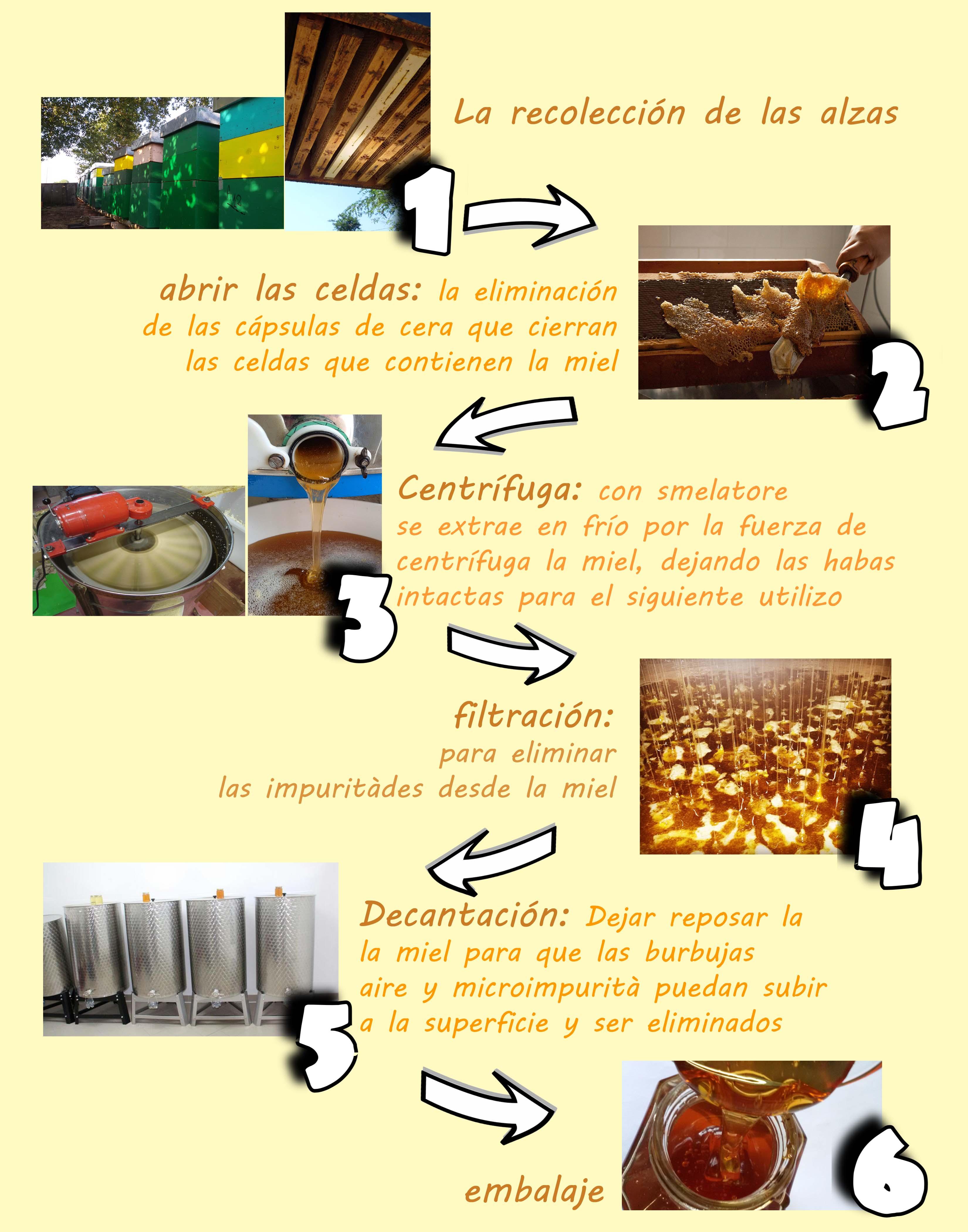 schema-completo-spagnolo